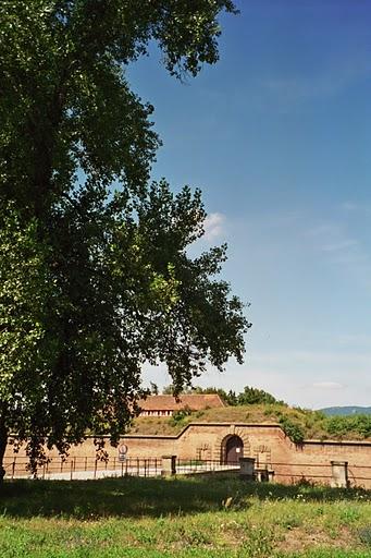 L'albero di Terezin